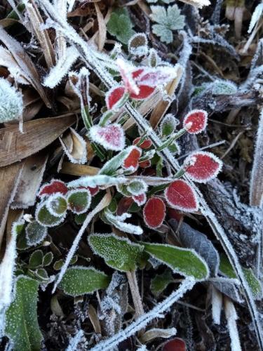 Naturaleza congelada